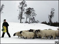A farmer with his flock (generic)