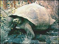 Tortoise. Image: BBC
