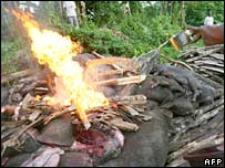 Dead pigs being burned. Image: AFP/Getty