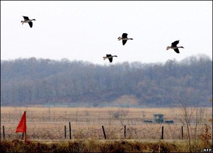 Ducks flu over Paju near the demilitarized zone on the Korean Peninsula