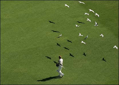 Paul Collingwood makes his way through a flock of seagulls
