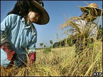 Two Burmese women in a rice field near the capital, Rangoon, on 20 November 2006