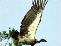 Vulture (picture - Gatehouse studio)