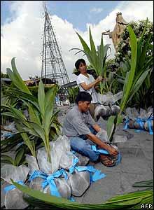 En un suburbio de Manila, capital de Filipinas, usan cocos para decorar este enorme �rbol artificial.