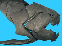Dunkleosteus terrelli  Image: Field Museum, Chicago