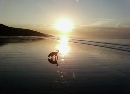 Lucy the dog on Amroth Beach, as captured by Gethyn Rees