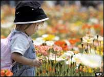 Una ni�a japonesa observa las flores
