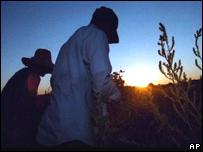 Trabajadores agrícolas hispanos en Idaho, EE.UU