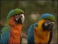 Parrots at the NOP parrot sanctuary near Eindhoven, Netherlands