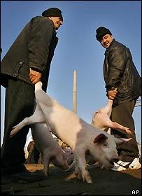 Animal fair at Rosiori de Vede