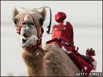 Primer plano de un camello montado por un peque�o robot que lo azuza