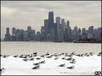 Birds sit in a snow drift with Chicago in the background