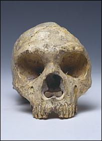 Calavera 1 (Museo de Historia Natural)