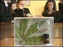 Cannabis leaf in display box