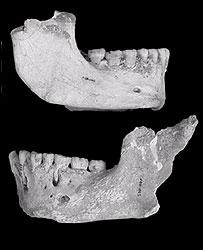 Neanderthal jawbones   Image: PNAS