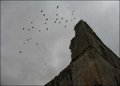 Birds at Chepstow Castle, as captured by Ashley Herrick, an American exchange student at Swansea University
