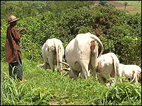 Fulani boy herding cattle (Pic: Mike Blyth)