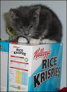 Kitten sitting on cereal packets