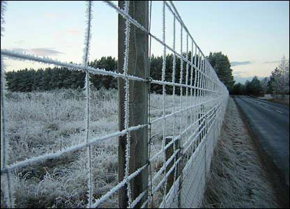 Fence covered by frost