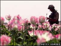 British soldier in Afghanistan opium field