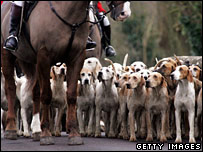 A pack of hunting dogs