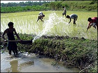 Farmers in West Bengal