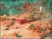 Rathlin sea bed