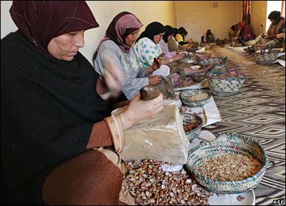 Moroccan women crushing Argan tree nuts
