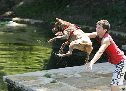 Boy throwing dog into water