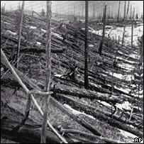 Tunguska trees, AP