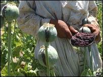 Recolector de resina de amapola en Afganistán.