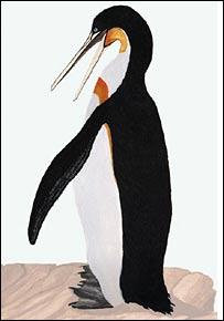 """Пингвины-великаны """"жили в тропиках"""""""