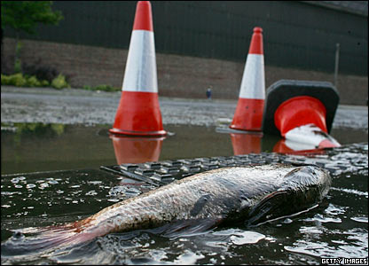 A dead fish in Brightside Lane, Sheffield