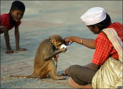 Monkey in Mumbai