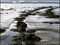 A fish trap at Culross. Picture courtesy of Scape