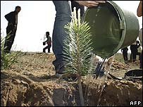 Tree-planting scheme in China