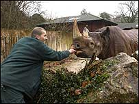 A Paignton Zoo senior keeper with Sita