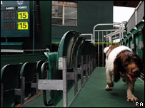 Sniffer dog searching seating areas