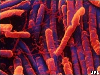 Image of clostridium