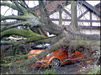 Car crushed by tree in Kidderminster. Picture by Gary Mucklow