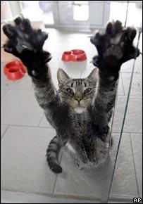 Cat  Image: AP