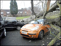 Trees crushed by falling trees in Kidderminster