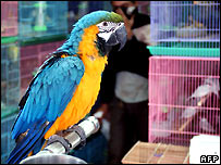 Parrot in pet shop - file photo