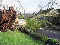 Tree blocking a road in Glenavy, Co Antrim