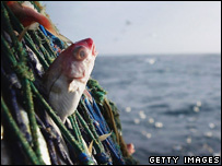 Fish in a trawl net (Getty Images)