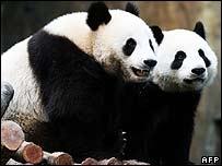 HK's new pandas, Ying Ying and Lok Lok