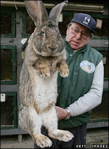 A German man holds a giant grey rabbit