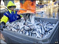 Herring being unloaded. Image: AP