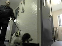 Norwich Prison sniffer dog