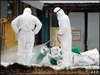 Officials disinfect the farm on 12 January
